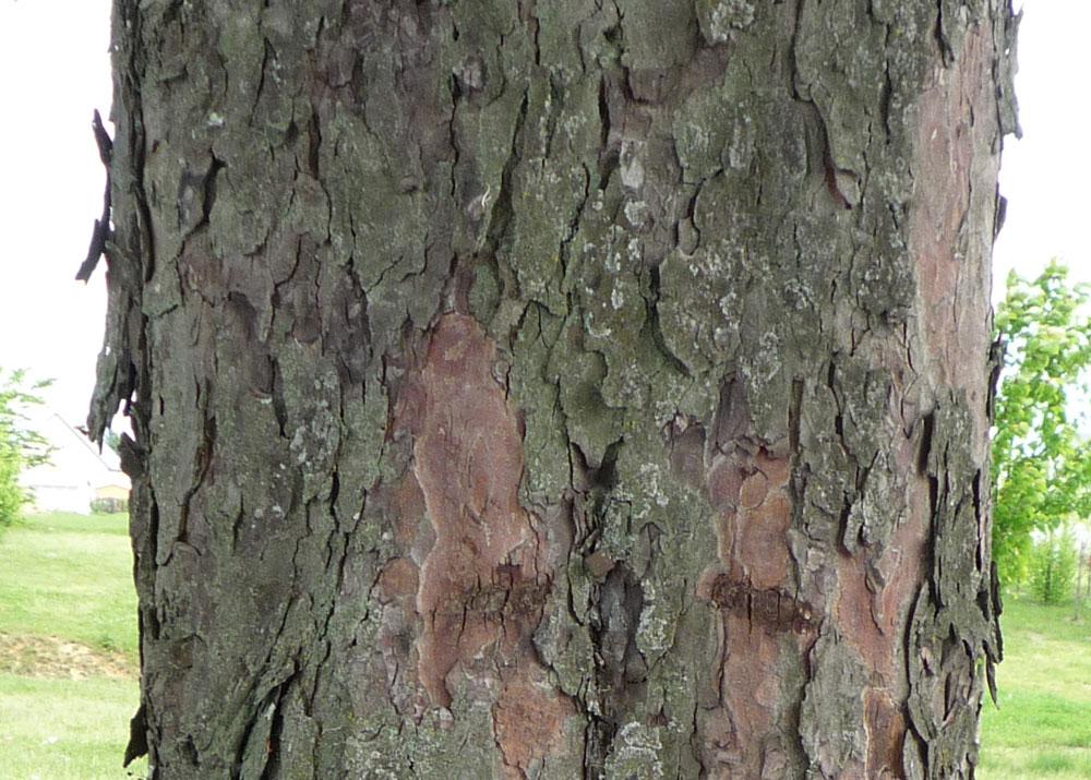 application identifier arbre par ecorce